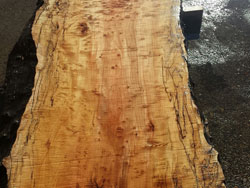 10 ft long 3 inch thick, curly maple with birdseye